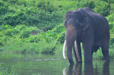 TopSlip Elephant